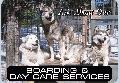 PET BOARDING & DAY CARE Sign<br>#5012-A--HARD PANEL